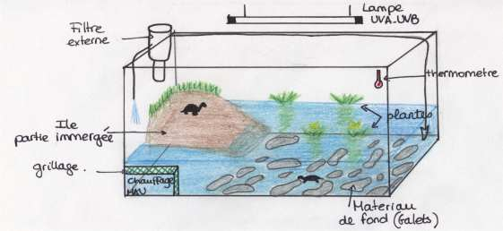 Pin le de la tortue dilan taiwan fonds d cran 1920x1080 d on pinterest - Bassin pour tortue aquatique villeurbanne ...